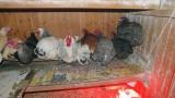 Wie die Hühner auf der Stange - zwei Herthas hinten links